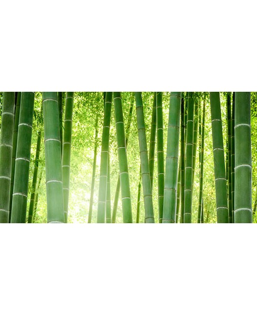 Jupe a volants Bamboo...